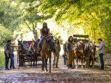 The Walking Dead (901) - A New Beginning
